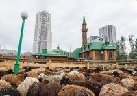 В Татарстане определены места для заклания в Курбан-байрам