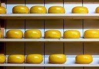 Специалисты сообщили, как выбрать хороший сыр