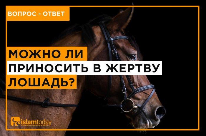 Каких животных можно приносить в жертву? (Источник фото: unsplash.com)