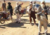 «Талибан» объявил о прекращении огня на время Курбан-байрам
