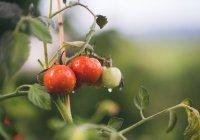 Стало известно, как россияне относятся к ГМО