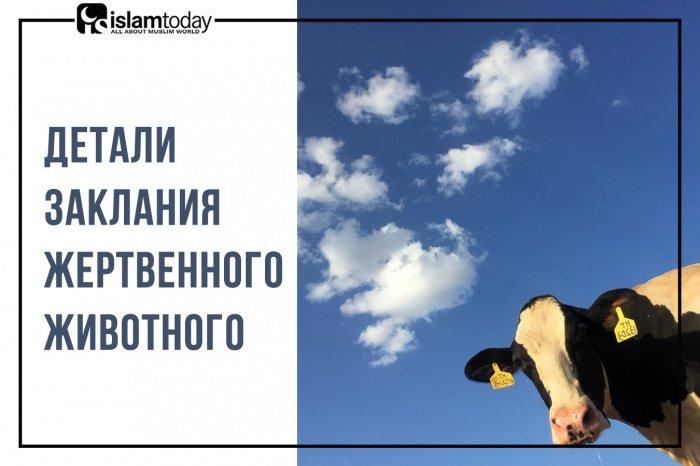Детали заклания жертвенного животного. (Источник фото: unsplash.com)