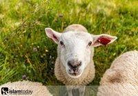 Что нужно сделать со шкурой жертвенного животного?