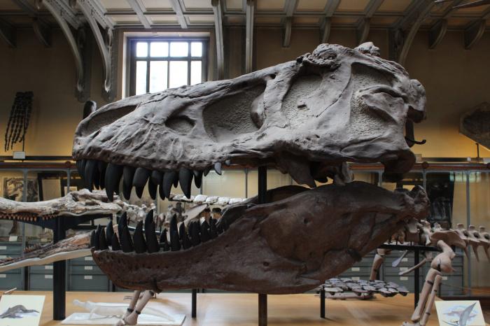 Вероятнее всего, динозавр скончался не от заболевания, а в результате наводнения, вместе с другими членами стада