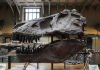 У динозавра, жившего 76 млн лет назад, обнаружили рак