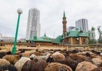 В ДУМ РТ подвели итоги Курбан-байрам-2020