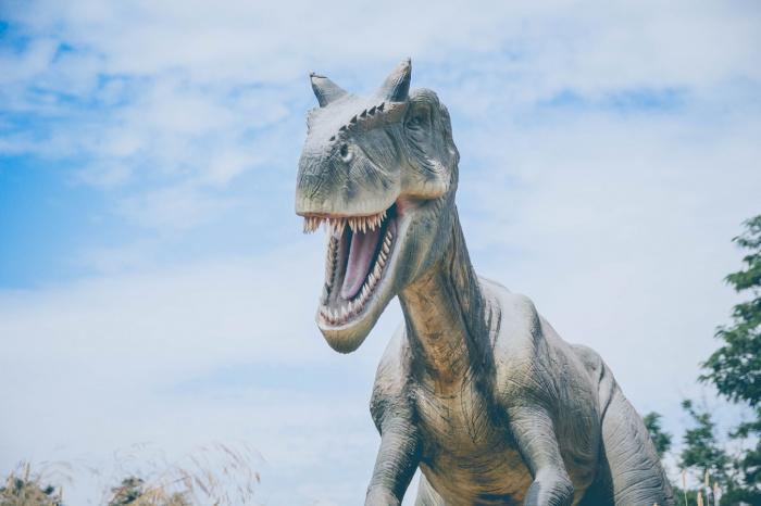 Гаттерии — последний выживший вид рептилий, ходивших по нашей планете вместе с динозаврами