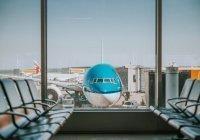 Аэропорт Дубая использует собак для выявления коронавируса