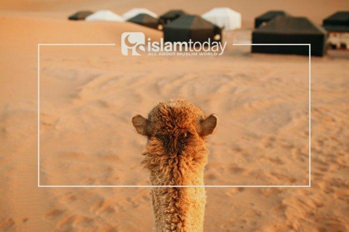 О жизни Умара ибн аль-Хаттаба. (Источник фото: freepik.com)