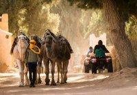 Стало известно, как будут принимать туристов в Тунисе