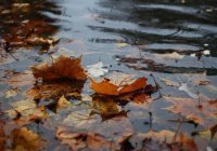 Синоптики рассказали о погоде в сентябре в России