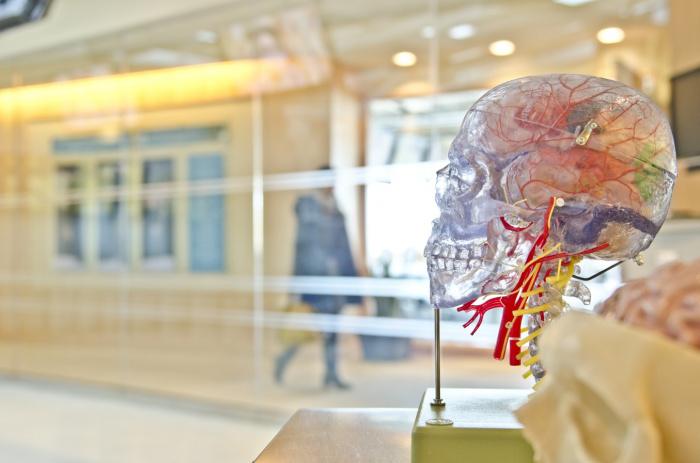 По словам специалиста, слабочастотное излучение, которое есть в сотовых телефонах, в теории способно влиять на образование доброкачественных опухолей у детей