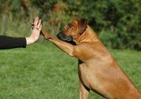 Муфтий Египта: правоверный мусульманин может сосуществовать с собакой