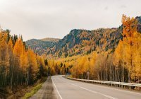 Выявлены ключевые причины гибели сибирских лесов