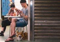 Перечислены идеальные породы собак для города