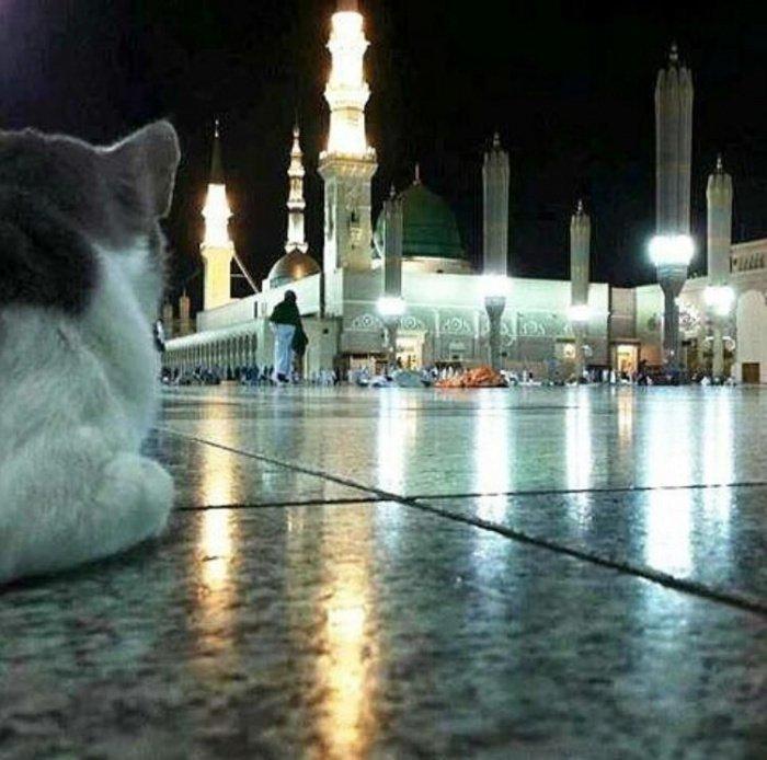 Как мекканские коты посещают ифтары и будят паломников на утреннюю молитву (ФОТО, ВИДЕО)