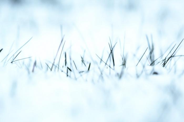 Снежный покров образоваться не успел