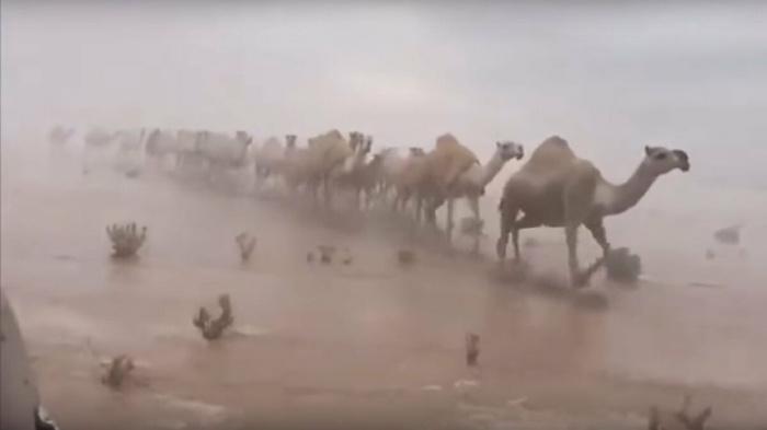 Редчайшее видео: пустыня в Саудовской Аравии полностью, затопленная водой