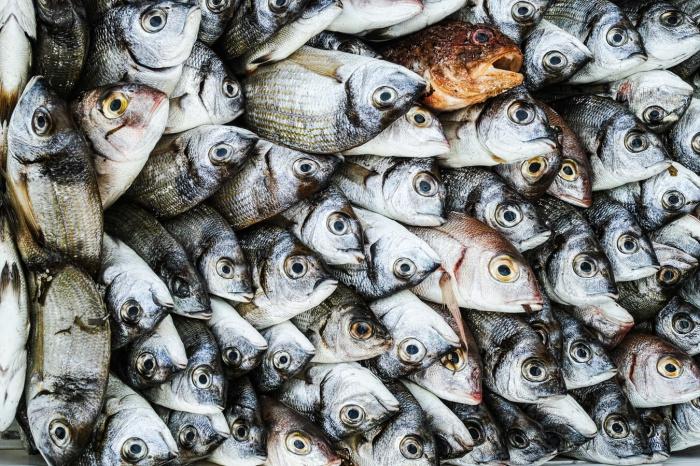 Россиянам советуют следить за происхождением рыбы и экологичностью района, тогда пользу организму будет приносить любая рыба