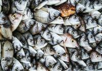 Выбрана самая полезная для здоровья рыба