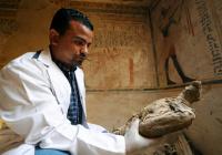 Ученые выяснили, для чего древние египтяне делали мумии птиц