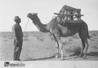 Как мусульмане и верблюды спасли население Австралии от голодной смерти