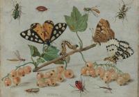 Ученые объяснили катастрофическое исчезновение насекомых