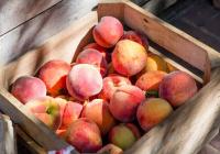 Названы продукты, снижающие риск рака груди