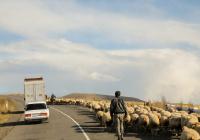 Асад заявил, что боевиков из Сирии перебрасывают в Карабах
