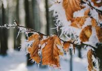 Россиян предупредили о гололеде, заморозках и пыльных бурях
