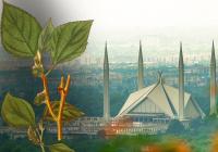 Почему пакистанский Исламабад называют мировой столицей аллергии?