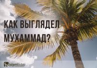 Что было написано между лопаток Пророка Мухаммада (ﷺ)?