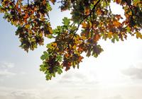 Названы регионы, где больше всего солнечных дней в ноябре