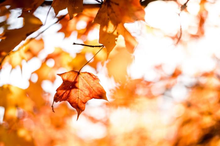 Продолжительность рабочего дня 3 ноября уменьшается на один час, поскольку он непосредственно предшествует праздничному нерабочему дню