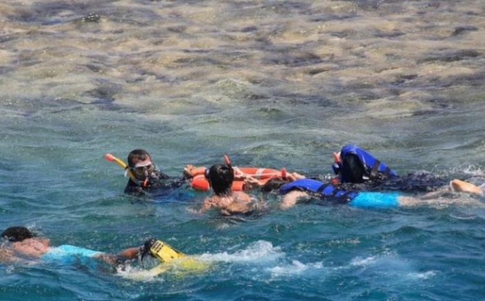 Акула напала на туристов в Египте.