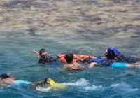 В Египте начнут поиски акулы, напавшей на туристов