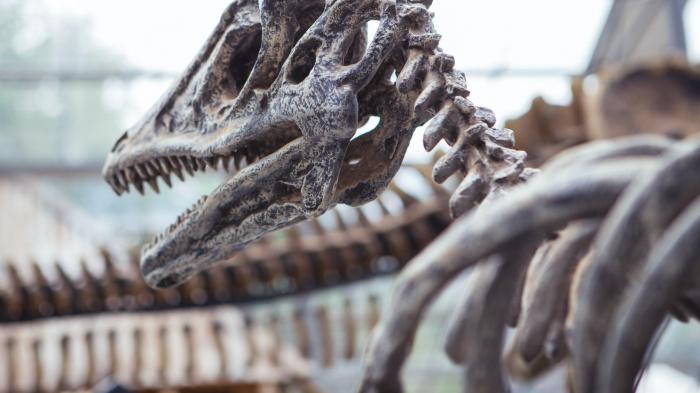 Обнаруженный скелет может стать одним из древнейших экземпляров триасового периода на территории России