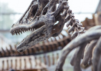 В России нашли скелет ихтиозавра, жившего более 240 млн лет назад