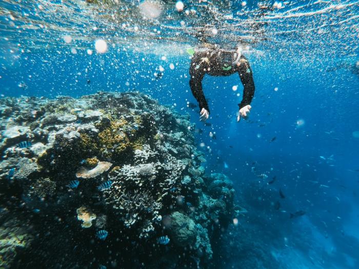 Новый риф высотой в 500 м специалисты обнаружили впервые за 120 лет на гряде Большого барьерного рифа