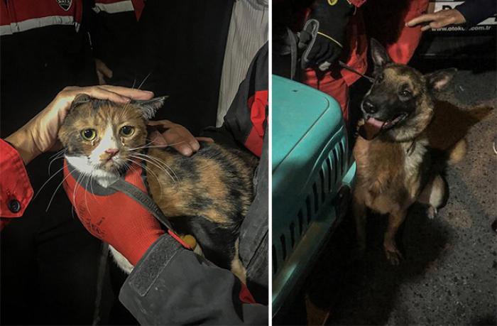 Спасенная кошка и собака, спасшая ее из-под завалов.