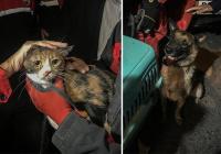 Собака спасла кошку из-под завалов после землетрясения в Измире
