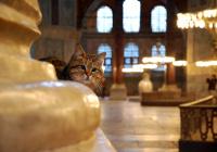 В Стамбуле умерла знаменитая кошка Гли, жившая в Айя-Софии