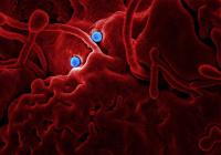 Обнаружены три фактора заражения коронавирусом