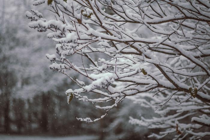 Ученый заключил, что средняя дата установления снежного покрова — конец ноября