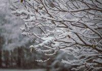 Обнаружено, как антициклон отразится на погоде в центре России