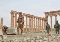 Россия вызвалась помочь Сирии восстановить объекты культурного наследия