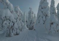 Выявлен наиболее благополучный регион России
