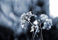 Предсказаны аномальные холода в ряде регионов
