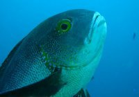 Поймана старейшая тропическая рыба на планете