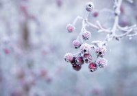 Названы российские регионы, где будут аномальные холода